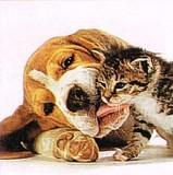 LEGAMI  ミニグリーティングカード  犬と猫