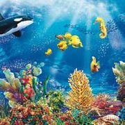 Maki  ペーパーナプキン 海・シャチ