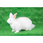 安全性・本物のような質感・感触にこだわった HANSA 製品『雪ウサギ 45』