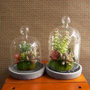 お部屋をグッと華やかに枯れない植物で作る手軽な癒し空間【イミテーションテラリウム・ドーム・S/L】