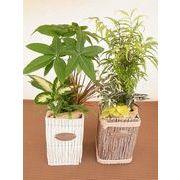 ウッドバンドル ミニ観葉植物/観葉植物/モダン/インテリア/寄せ植え/ガーデニング