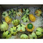 ハロウィン用北海道産かぼちゃ ギャラクシーオブスター ハロウィン/かぼちゃ/カボチャ/パンプキン