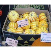 ハロウィン用北海道産かぼちゃ プッチーニ ハロウィン/かぼちゃ/カボチャ/パンプキン/北海道産