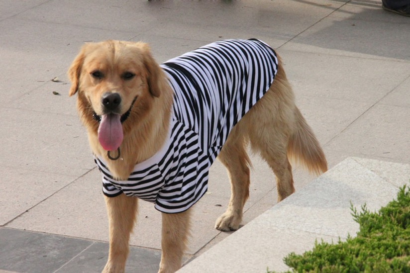 大きいサイズドッグウェア 大型犬用服 ペット用品