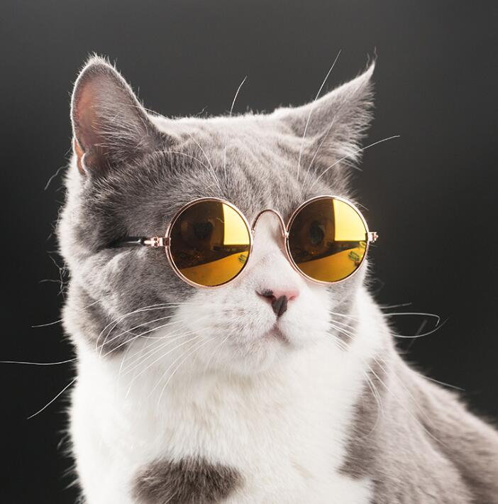 ペット用サングラス 小型犬/猫 多色 選べる5色 ペット用 可愛い アクセサリー 飾り