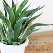 観葉植物 リュウゼツラン インテリア 店舗ディスプレー