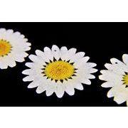 トレンドパーツ【本物のプリザーブドフラワー】本物の花を樹脂でコーディングしたナチュラルパーツ